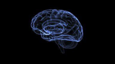 آسیبهای مغزی