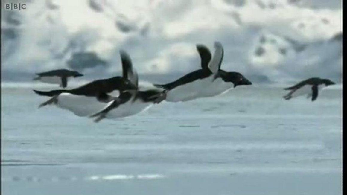 دروغ اول آوریل پنگوئنهای پرنده