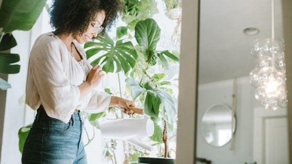 10 گیاه تمیزکننده هوا که خانهای سالمتر ایجاد میکنند: راحتتر تنفس کنید