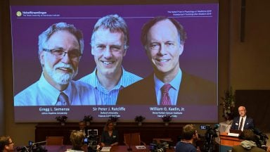 نوبل پزشکی 2019