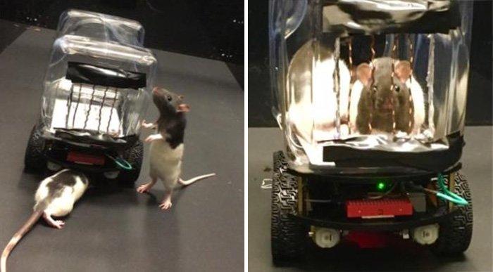 ݛانندگی موشها