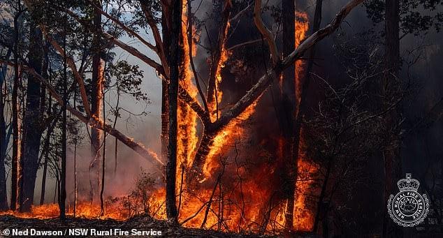 بحران آتشسوزی استرالیا