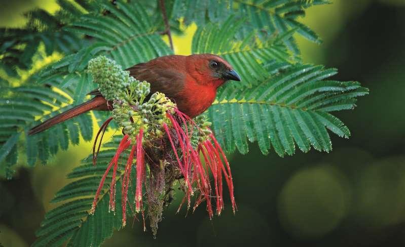راهنمای محلی بلیز - 3. به تماشای پرندگان در جنگل بنشینید